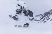 _M4_0716-psy-husky-zaprzeg-Grenlandia