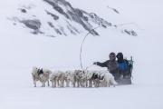 _M4_0723-psy-husky-zaprzeg-Grenlandia