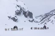_M4_0754-psy-husky-zaprzeg-Grenlandia