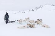 _M4_0815-psy-husky-zaprzeg-Grenlandia