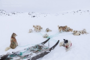 _M4_0850-psy-husky-zaprzeg-Grenlandia