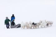 _M4_0861-psy-husky-zaprzeg-Grenlandia