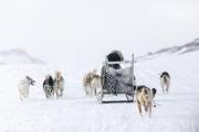 _M4_1048-psy-husky-zaprzeg-Grenlandia