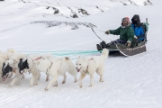 _M4_1089-psy-husky-zaprzeg-Grenlandia