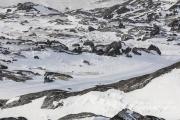 _M4_1149-psy-husky-zaprzeg-Grenlandia
