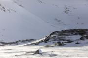 _M4_1168-psy-husky-krajobraz-Grenlandia