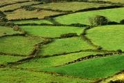 irlandia-rel-2006-30