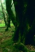 irlandia-rel-2006-68