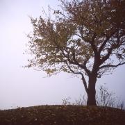wisla-2008-39