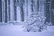 zima-2010-16