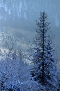 zimowo-2008-07