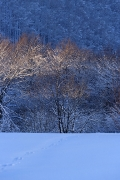 zimowo-2008-08