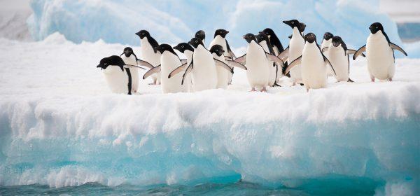 pingwiny-antarktyda